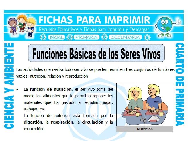 Funciones Básicas De Los Seres Vivos Para Cuarto De Primaria Fichas Para Imprimir