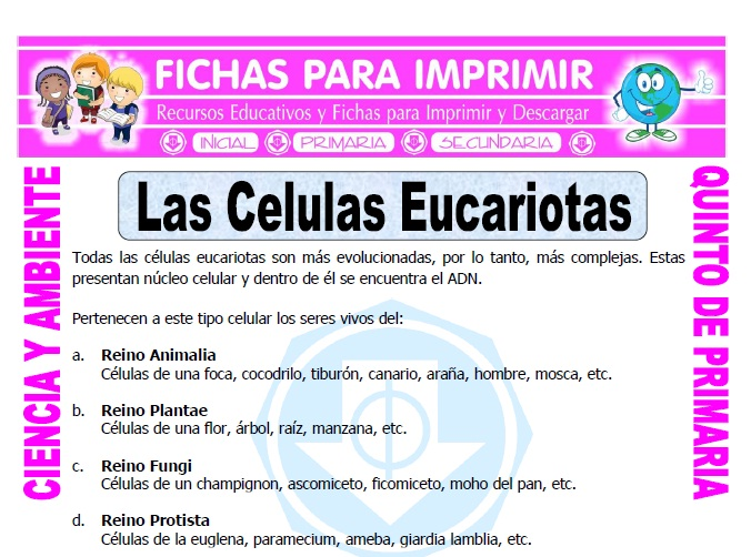 Ficha de Las Celulas Eucariotas para Quinto de Primaria
