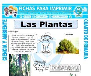 Las Plantaspara Cuarto de Primaria
