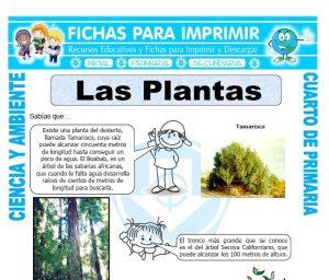 ficha de Las Plantas para Cuarto de Primaria