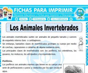 Los Animales Invertebradospara Cuarto de Primaria