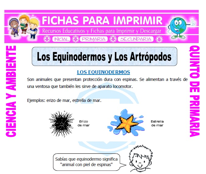 Ficha de Los Equinodermos para Quinto de Primaria