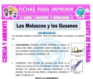 Ficha de Los Moluscos para Quinto de Primaria