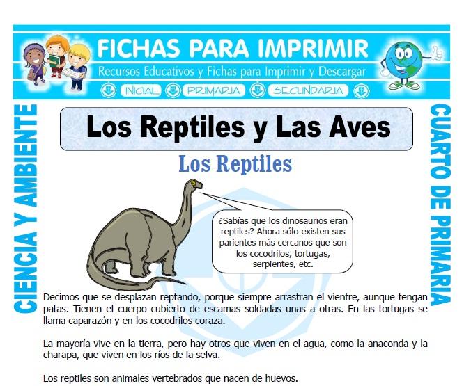 ficha de Los Reptiles y Las Aves para Cuarto de Primaria