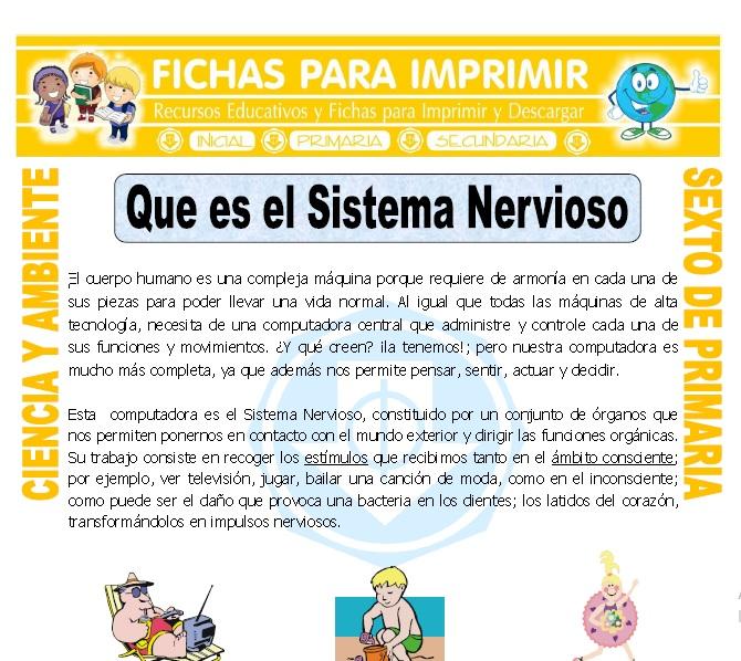 Ficha de Que es el Sistema Nervioso para Sexto de Primaria