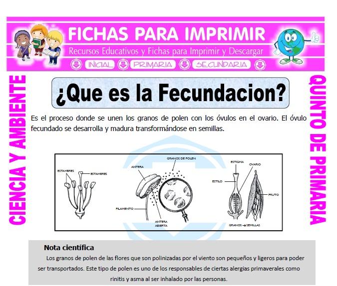 Ficha de Que es la Fecundacion para Quinto de Primaria