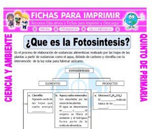 Ficha de Que es la Fotosintesis para Quinto de Primaria