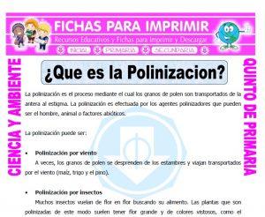 Ficha de Que es la Polinizacion para Quinto de Primaria