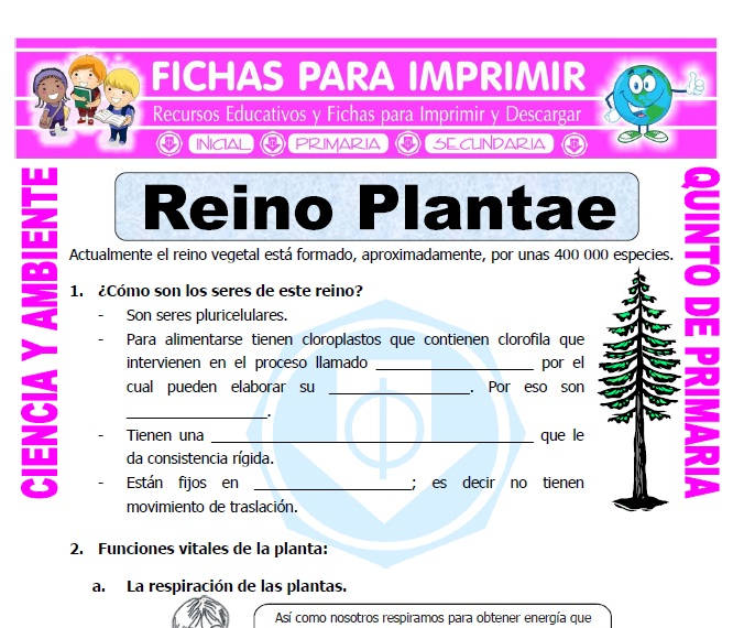 Ficha de Reino Plantae para Quinto de Primaria