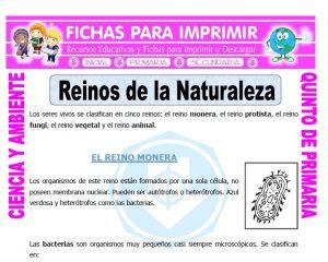 Ficha de Reinos de la Naturaleza para Quinto de Primaria