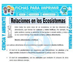 Relaciones en los Ecosistemaspara Cuarto de Primaria
