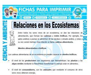 ficha de Relaciones en los Ecosistemas para Cuarto de Primaria