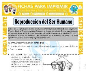 Reproduccion del Ser Humano para Sexto de Primaria