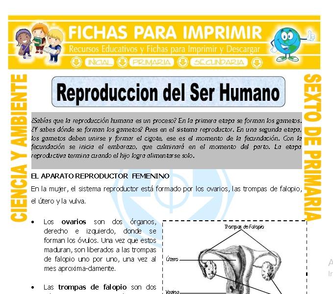 Ficha de Reproduccion del Ser Humano para Sexto de Primaria