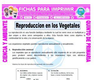 Ficha de Reproduccion en los Vegetales para Quinto de Primaria