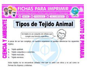 Ficha de Tipos de Tejido Animal para Quinto de Primaria