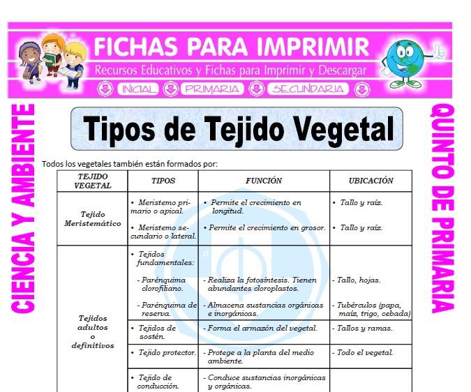 Ficha de Tipos de Tejido Vegetal para Quinto de Primaria