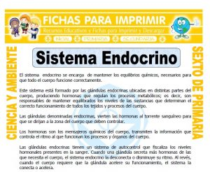 Ficha de Sistema Endocrino para Sexto de Primaria