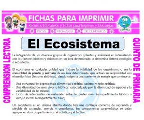 El Ecosistema para Quinto de Primaria