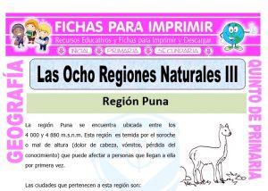 Ficha de Región Puna y Janca para Quinto de Primaria