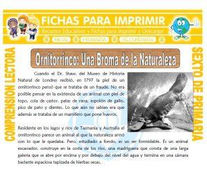 Ornitorrinco una Broma de la Naturaleza para Sexto de Primaria