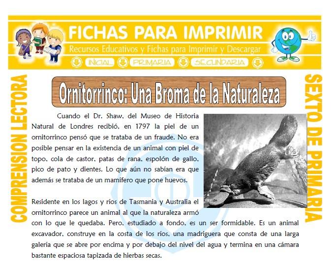 Ficha de Ornitorrinco una Broma de la Naturaleza para Sexto de Primaria