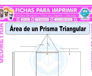 Área de un Prisma Triangular para Quinto de Primaria