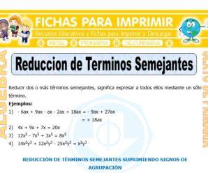 Reducción de Términos Semejantes para Sexto de Primaria